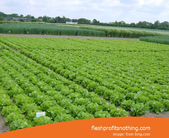 [NEW] Getting Started Tips Of Organic Farming Business
