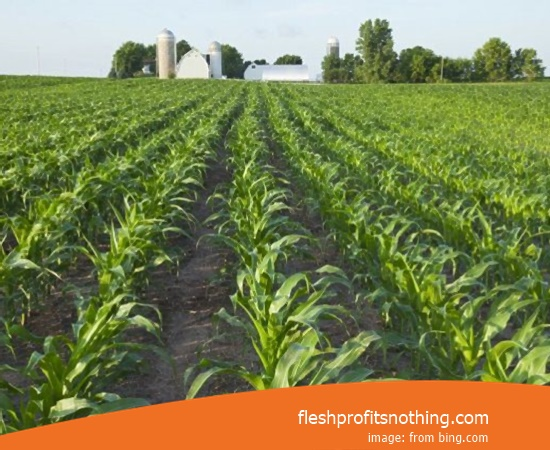 Here Are Some Advantages Of Banana Farming