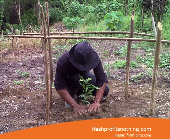 Location Agriculture Of Natuna Clove Seedlings
