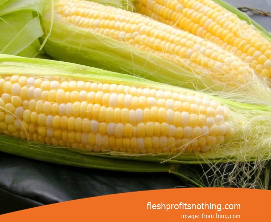 Cost Buy of Corn Seed 816 Latest