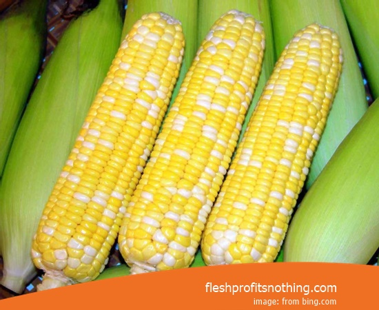 Cost  of Corn seedlings for the latest livestock feed