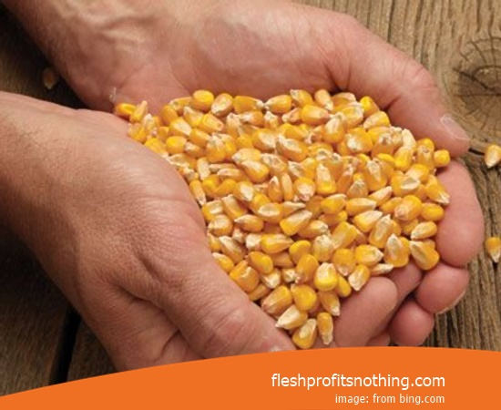 Cost Buy of Corn Seed 771 Latest