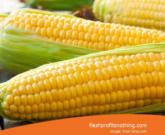 Cost Buy of latest seed Corn seeds